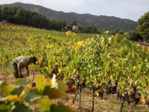 wijnland-spanje